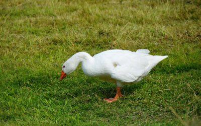 Be kind to yourself: self-care and the golden goose